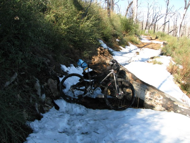 Snowy trail and downed tree