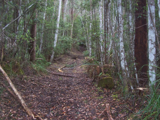 Completely lost on a steep and rugged trail near Geeveston. Fallen trees and steep hills meant pushing the bike was the order of the day.