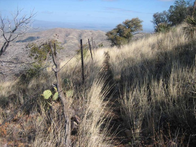Prickly pear and barbed wire - good reasons to stay on the trail!