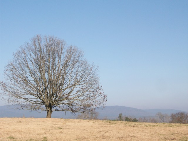 lonely tree - Kiamichi Mountains
